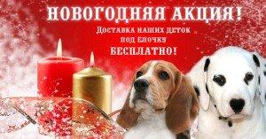 Новогодняя Акция!