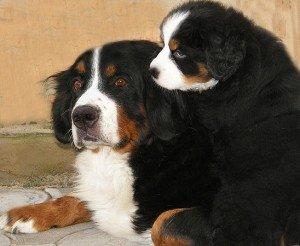 Сэнди со щенком