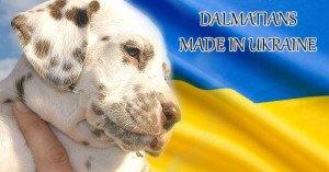 Щенки Далматина